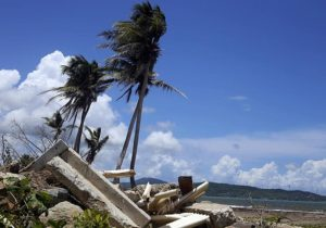Wind-blown palm trees near ruins in Puerto Rico